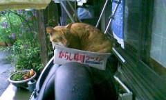 からし味噌ラーメン猫